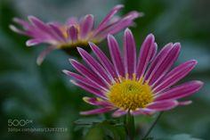 flower by Sultann. @go4fotos