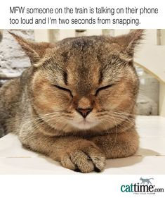 You love cats. You love memes. Put them together, and your day is about to get a whole lot better. Here are 45 more hilarious cat memes to put a smile on your face. People Laughing, Cat Facts, Love Memes, Premium Wordpress Themes, Public Transport, Cat Memes, Funny Cats, Hilarious, Wellness