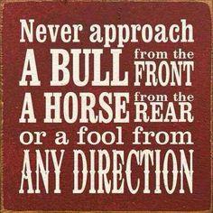 Never approach a Bull