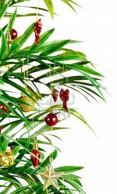 pretty Christmas Deserts, Tropical Christmas, Coastal Christmas, Christmas Tree, Palm Tree Pics, Palm Trees, Summer Trees, Holiday, Plants