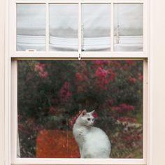 The inner life of a #suburban house #cat. #morningwalk #millburnnj #photography Suburban House, Marketing, Cats, Modern, Pictures, Photography, Animals, Life, Photos