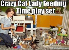 Funny Animal Images, Funny Animals, Funny Pictures, Crazy Cat Lady, Crazy Cats, Lady Memes, Cute Cats, Funny Cats, Keep Company
