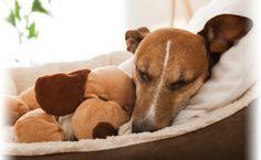 Her deler vi glæderne, udfordringerne og alle de sjove, skøre og vidunderlige øjeblikke i livet med hund
