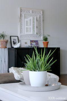Aloe/KatiJukarainen