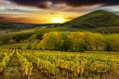 Tuscany by giuseppepeppoloni #nature #travel #traveling #vacation #visiting #trip #holiday #tourism #tourist #photooftheday #amazing #picoftheday