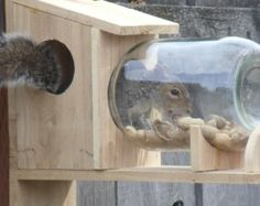 Squirrel Feeder of Reclaimed Cedar..
