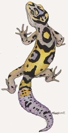 Sale geckos adult leopard for
