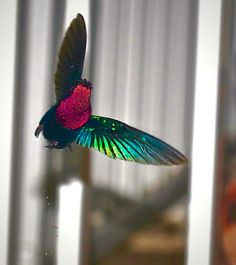 Photo Shot taken with Canon EOS 26 shares, 55 likes and 1587 views. Birds, Pets, Image, Attila, Bird