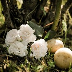 How to Propagate Roses Using Potatoes - http://homeguides.sfgate.com/propagate-roses-using-potatoes-23904.html