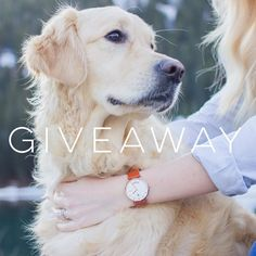 Contest Announcement    We are partnering with @arvo to giveaway a watch of your choice! Want to enter? -  Rules --- 1. Follow all hosts  @goldens_ofinstagram @arvo @ourgoldenpenny  2. Tag one friend in each comment (the more comments the more entries!) --- Contest runs 3/24 - 3/26. Winners will be announced shortly after! Good luck!! by goldens_ofinstagram #lacyandpaws #goldenretriever #goldenretrieverpuppy #goldenretrievers #goldenretrieversofinstagram #goldenretrieverpuppies…