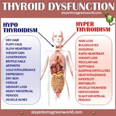 Thyroid function test mainly detects hyperthyroidism or hypothyroidism. This involves detection on the levels of thyroid hormones produced by thyroid glands. Thyroid Issues, Thyroid Gland, Thyroid Cancer, Thyroid Hormone, Thyroid Disease, Thyroid Health, Heart Disease, Thyroid Diet, Symptoms Of Low Thyroid