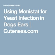 Dog Ear Yeast Infection Monistat