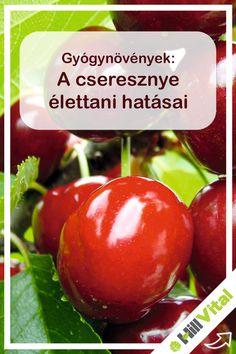 Prunus, Home Remedies, Cherry, Vegetables, Fruit, Health, Food, Cherries, Health Care