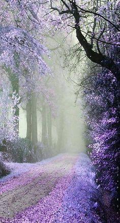 Pétales minuscules tombant des branches et venant peindre couleur lavande les bords du chemin.