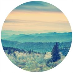 Into The Forest | Circle Wall Decals | WallsNeedLove