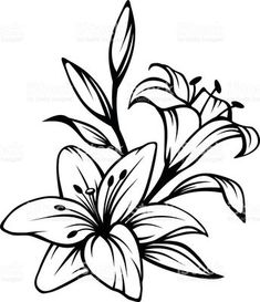 Vector black contour of lily flowers isolated on a white background. Lily Flower Tattoos, Beautiful Flower Tattoos, White Lily Flower, White Lilies, Lily Tattoo Design, Flower Tattoo Designs, Lirio Tattoo, Lilies Drawing, Lilly Flower Drawing