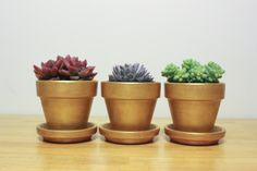 DIY gold pots for your colorful succulents - perfect house plants