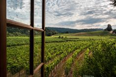 Postcard from Anderson Valley, California. View from Goldeneye. www.avwines.com