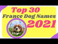 Top 30 Best French Dog Names With Meaning 2021 ! Unique Dog Names ! Best Pet Names - YouTube Popular Male Dog Names, Male Dog Names Unique, Dog Names Male, Cute Names For Dogs, Best Dog Names, Pet Names, Best Dogs, Cute Dogs, French Dog Names