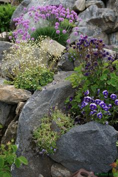 Excellent Pictures rockery garden Style As a touch shorter by the due date through your hectic agenda, there is nevertheless the method love gardening. Rockery Garden, Rock Garden Plants, Succulents Garden, Garden Paths, Rock Garden Walls, Rock Wall Gardens, Garden Steps, Back Gardens, Small Gardens