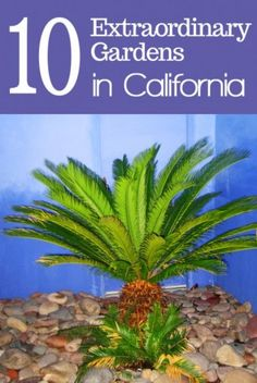 As the breadbasket of the country, California is known for its bountiful harvests of everything from avocados to grapes. But the Golden State is also home to a wealth of Eden-like gardens that thrive thanks to California's mild weather and variety of micr