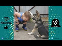 Cat and Dog want owner to show affection Funny Compilation - YouTube