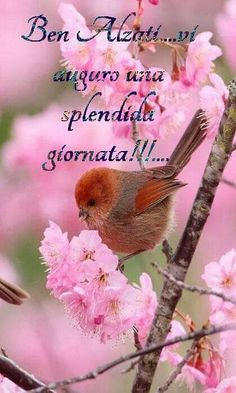 Amazing Flowers, Animals And Pets, Good Morning, Birds, Cherry Blossoms, Video, Sign, Google, Happy