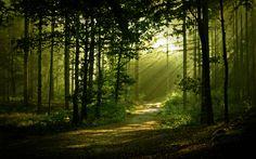 morning-forest-scenery-free-desktop-wallpaper-2560x1600.jpg (2560×1600)