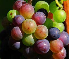 Uva multicolor Unnamed - Pixdaus