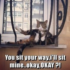 10+ Funny Cat Meme to have a good laugh
