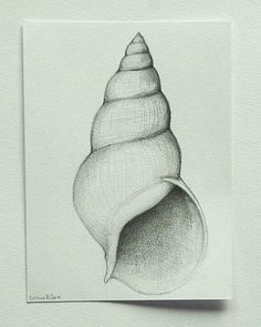 Items op Etsy die op RESERVED - Shell - number 2 - Original pencil drawing on acid free paper Canson 200 gr by Cristina Ripper lijken Shell Drawing, Painting & Drawing, Drawing Techniques, Drawing Tutorials, Drawing Ideas, Drawing Tips, Drawing Sketches, Cool Drawings, Sketching