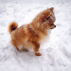 Throwback to puppy Ginger's first time in the snow! by monique_ginger