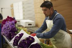 Hand Packing and Shipping is part of the Quality Process at Joseph & Sons. California Location, Family Flowers, Delphinium, Flower Farm, Joseph, Sons, Packing, Bag Packaging, Delphiniums