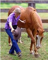 10 Simple Tricks You Should Teach Your Horse   horse tricks 101