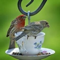 How To Upcycle Tea Cups Into Bird Feeders. By So Crafty contributor CherylFay. http://crafting.squidoo.com/how-to-upcycle-tea-cups-into-bird-feeders