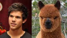animals that look like celebrities | 13 Pictures Of Celebrities Who Look Like Animals