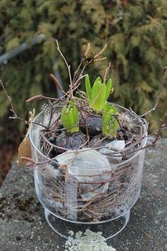 Frühlingsdekoration selber machen: Hyazinthe in Glasgefäss pflanzen & ausgarnieren