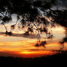 2048x2048 Wallpaper do sol, árvores, céu, silhueta, paisagem