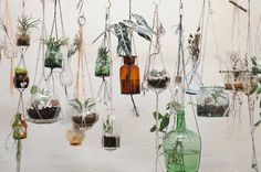 hanging plants in jars