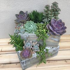 Custom succulent arrangement for a customer. Shipped as a DIY kit get yours from succulents-and-more.com