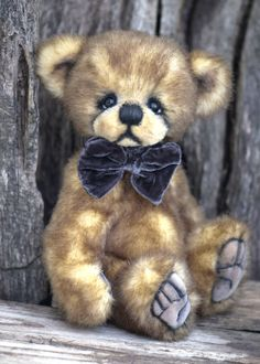 Three O'Clock Bears: Little Tommy Available for adoption!