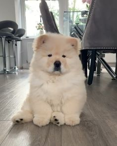 That's one confused floof right there. An adorable one. Fluffy Dogs, Fluffy Animals, Cute Dogs And Puppies, Baby Dogs, Doggies, Bulldog Puppies, Cute Little Animals, Cute Funny Animals, Beautiful Dogs