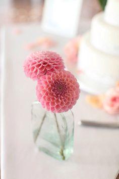 Pink dahlias, perfection
