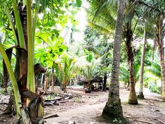 The path from the Crystal Bay to our hotel. Padang, Bali, Strand, Paths, Trunks, Crystal, Jungles, Travel Report, Island