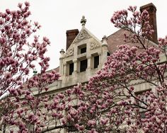 The National Bank of Washington Through the Blossoms