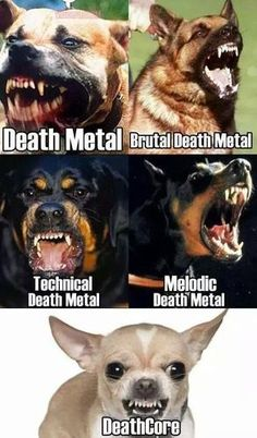 Death Metal Heavy Metal Memes. https://www.tsu.co/eatnails http://eatnails.com