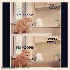 Cat Im Pooping I don't know why I find this so hilarious!