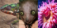 Some of these freaky creatures may stump you.
