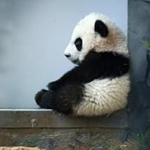 Lonely Panda. What??!! I'll come sit with you! And give you hugs! Lots of hugs!