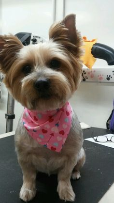 The 21 Best Dog Grooming At Friend And Companion And Dog Grooming